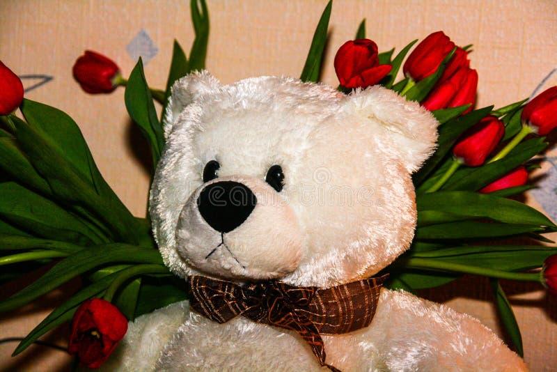 Witte Teddybeer op de achtergrond van rode tulpen stock foto's