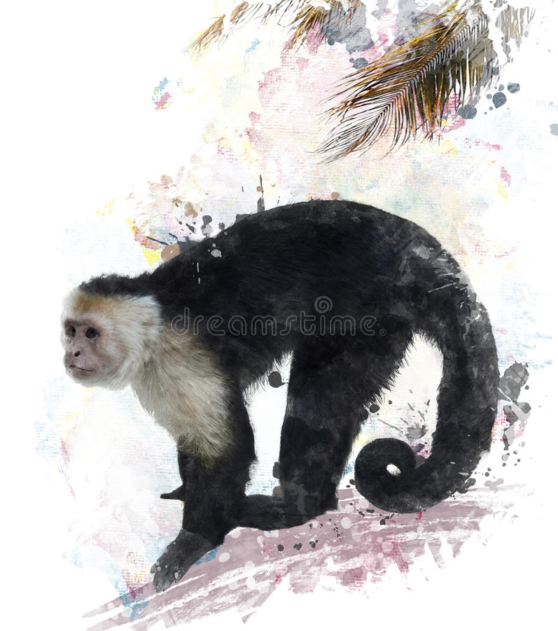 Witte Throated-Capuchin Aap vector illustratie