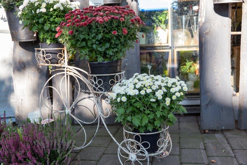 Witte tribune met potten voor bloemen, chrysant en heide, bloemdecoratie royalty-vrije stock afbeeldingen