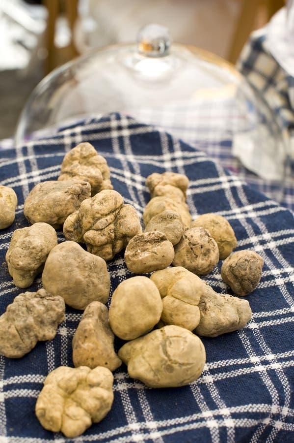 Witte truffels royalty-vrije stock foto