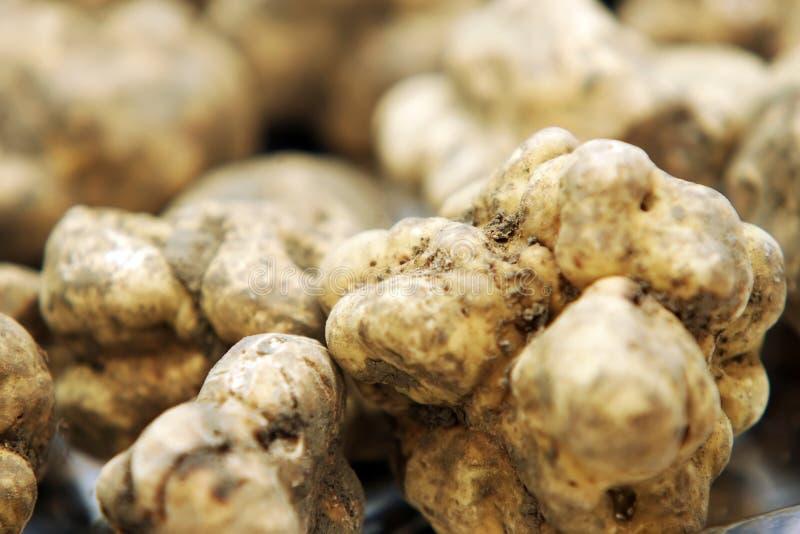 Witte Truffels stock afbeeldingen