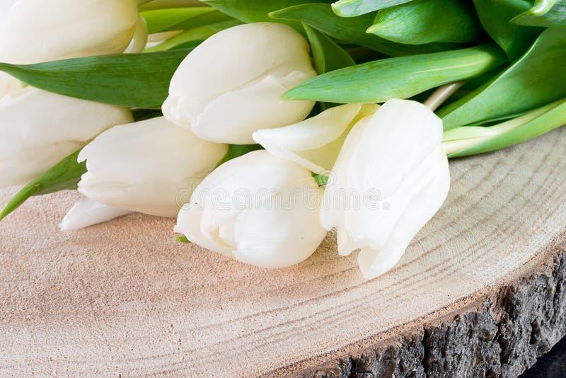 Witte tulpen stock afbeelding