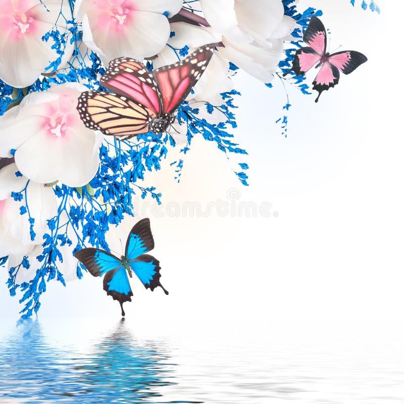 Witte tulpen met blauw stock afbeeldingen