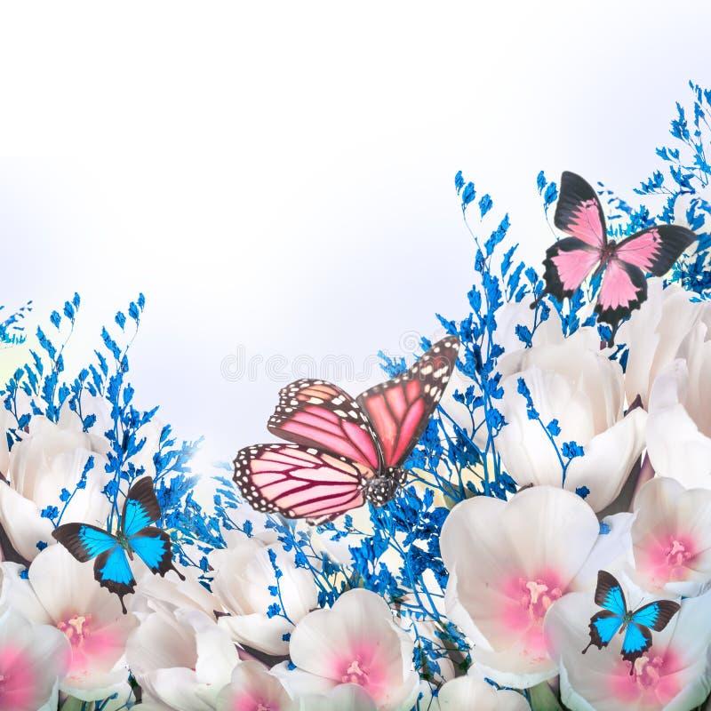 Witte tulpen met blauw gras royalty-vrije stock afbeelding