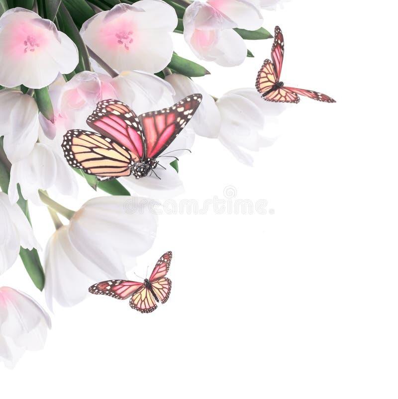 Witte tulpen met groene gras en vlinder. stock illustratie