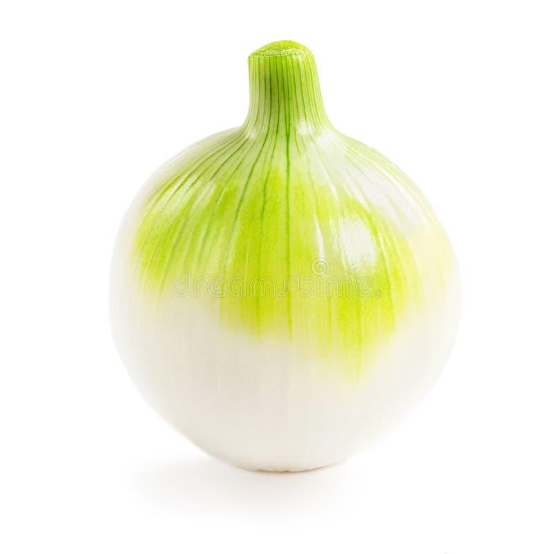 Witte uien geïsoleerd Sluiting van de groente in Uien royalty-vrije stock afbeelding