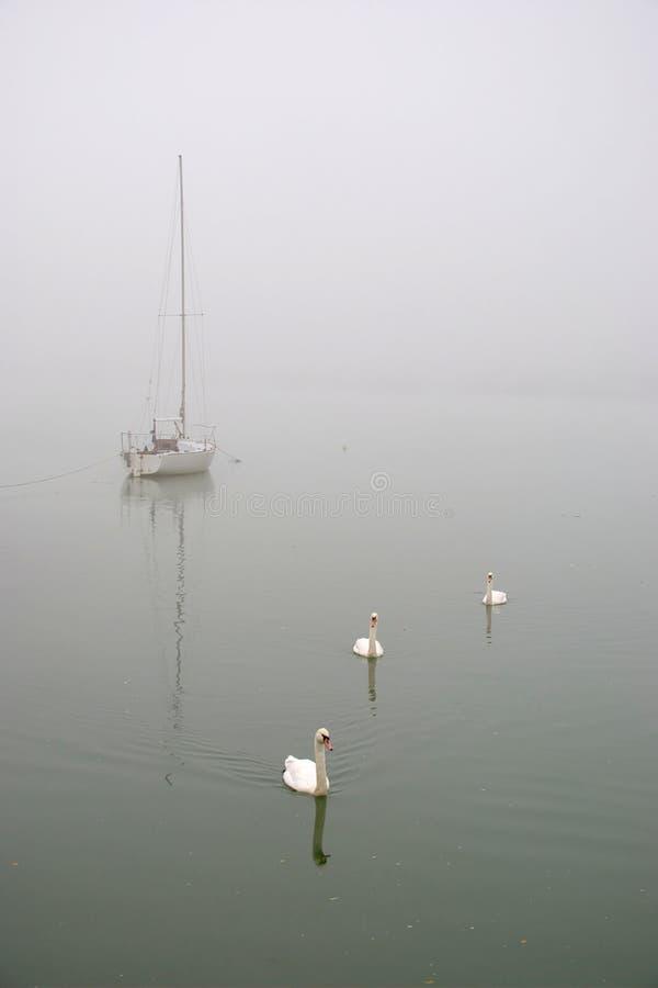 Witte Varende Boot en 3 Zwanen in de Mist royalty-vrije stock afbeelding