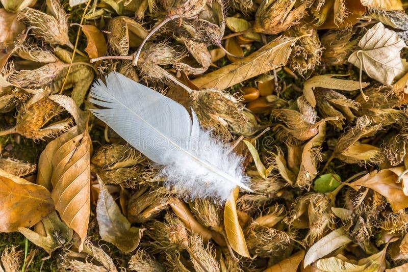 Witte veer op droge bladeren op een dalingsdag stock foto
