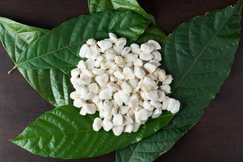 Witte verse cacaobonen stock foto's