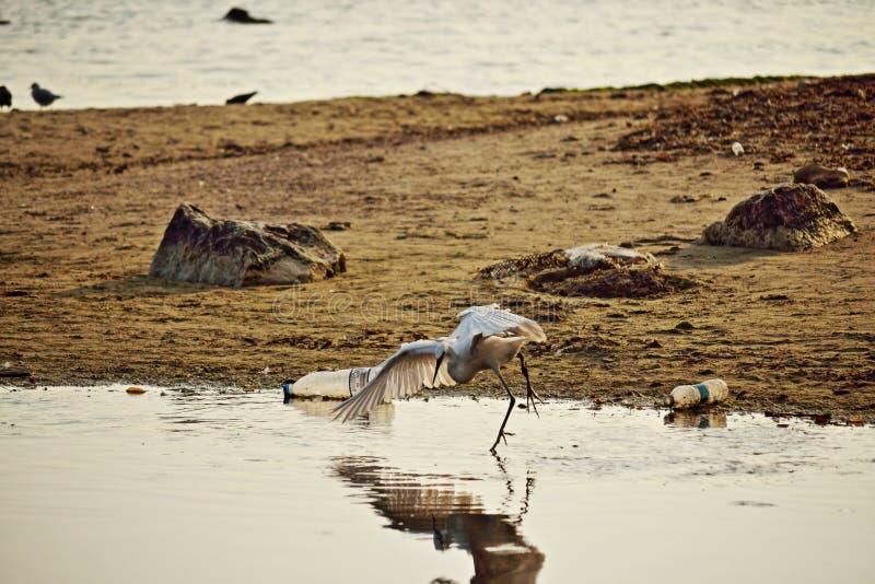 Download Witte Vogel Die In De Kust Vissen Stock Afbeelding - Afbeelding bestaande uit milieu, vogel: 107701213