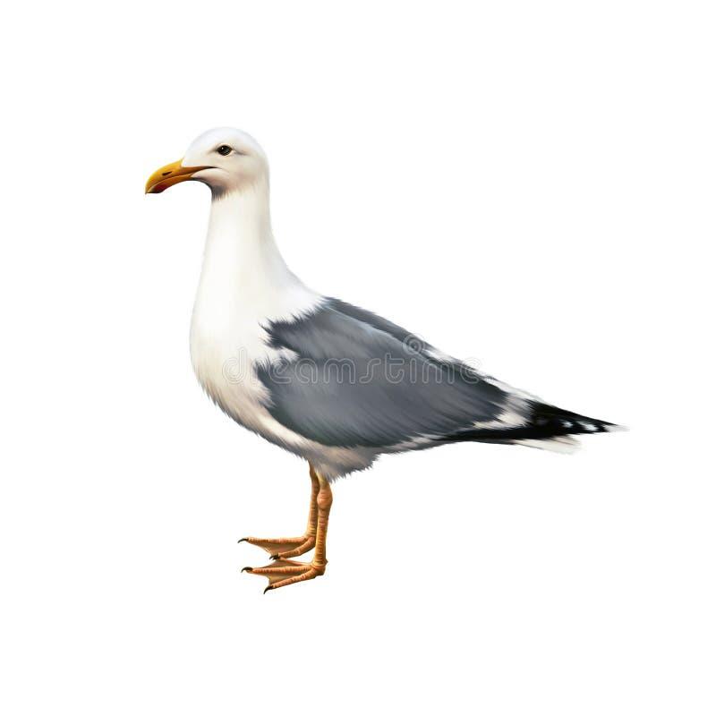 Witte vogelzeemeeuw status stock fotografie