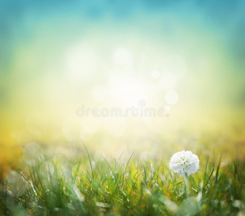 Witte werkingsgebiedbloemen met groene grasachtergrond stock foto's