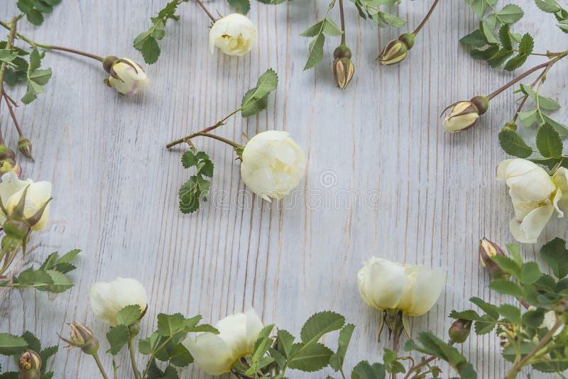 Witte wild nam bloemenkader toe royalty-vrije stock foto's