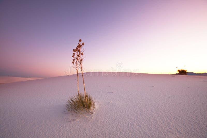 Witte Woestijn stock fotografie