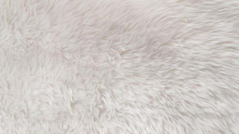 Witte wol textuurachtergrond, lichte natuurlijke dierlijke wol, witte naadloze katoen, textuur van zacht bont voor ontwerpers, cl stock afbeeldingen