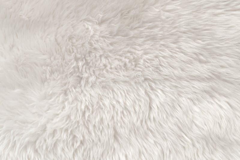 Witte wol textuurachtergrond, lichte natuurlijke dierlijke wol, witte naadloze katoen, textuur van zacht bont voor ontwerpers, cl stock foto's