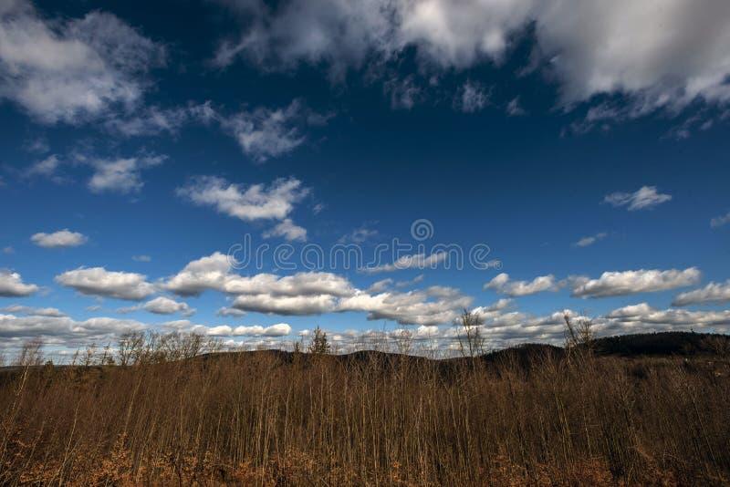Witte wolken op een donkerblauwe hemel die over het bos drijven stock foto