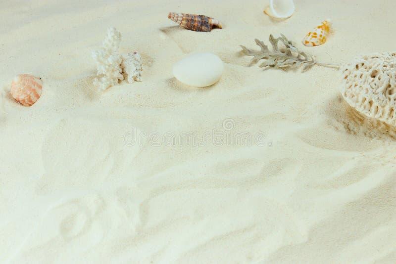 Witte Zand en shells de achtergrond van het overzeese strand verticale mening, close-up zandachtergrond met shells van schaaldier royalty-vrije stock fotografie