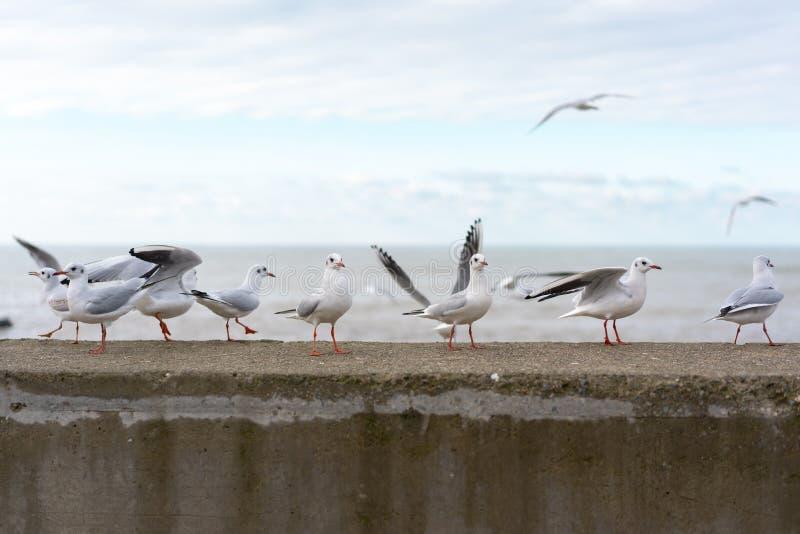 Witte zeemeeuwen op een concrete omheining stock fotografie