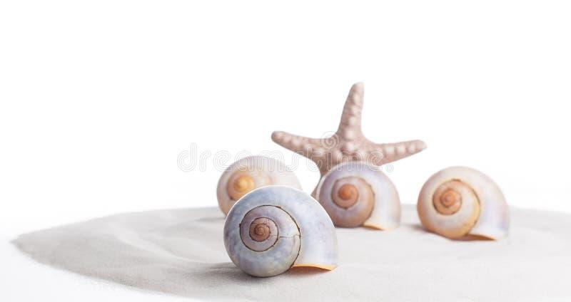 Witte zeeschelpen en een zeester op wit zand Close-up De ruimte van het conceptenexemplaar royalty-vrije stock afbeeldingen