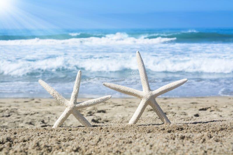 Witte zeester op strand stock foto's
