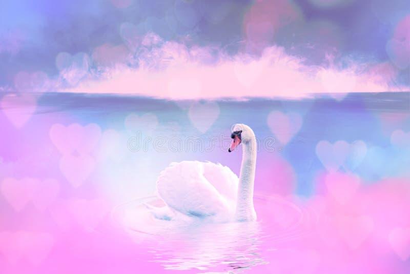 Witte zwaan in het mistige meer bij de dageraad Ochtendlichten romantische achtergrond Mooie zwaan cygnus Romaans van witte zwaan royalty-vrije stock afbeeldingen