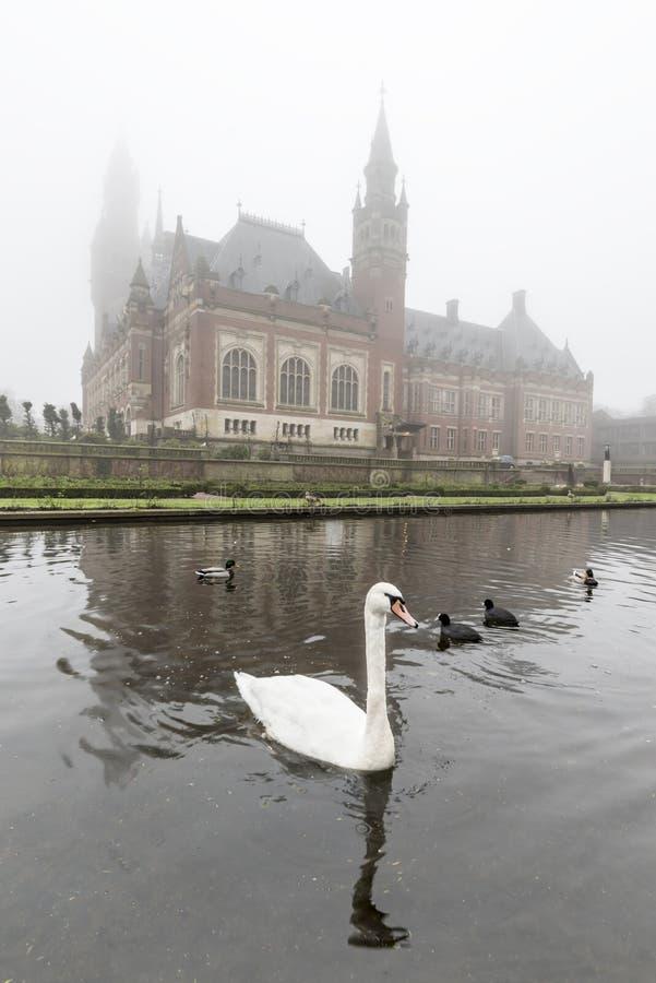 Witte zwaan op de vijver van het Vredespaleis, Vredespaleis, onder de mist stock foto's