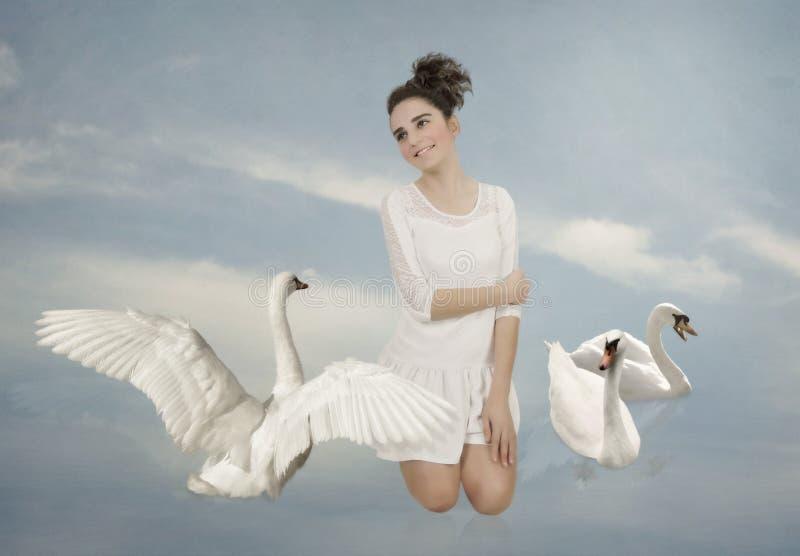 Witte zwanen stock afbeelding