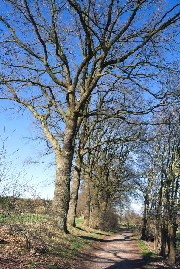 Wittmoor -在胡同的粗糙的树-我- 库存照片
