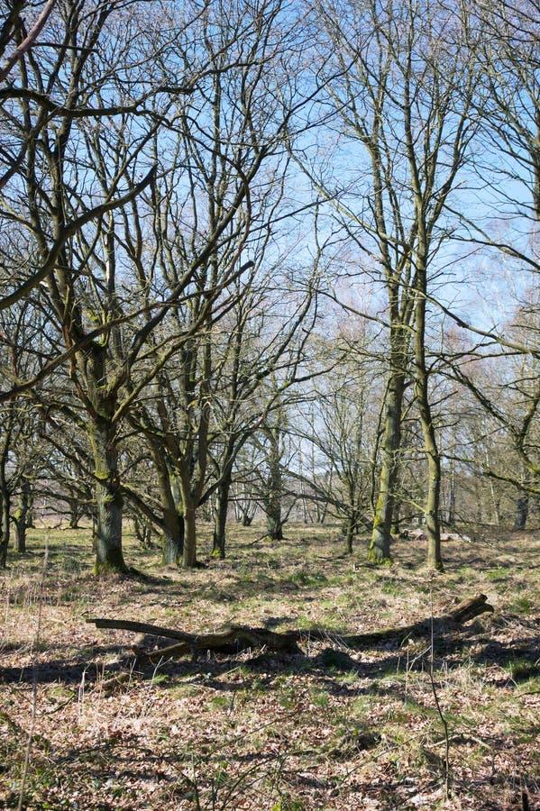 Wittmoor - gnarled cienie i drzewa - Ja - fotografia royalty free