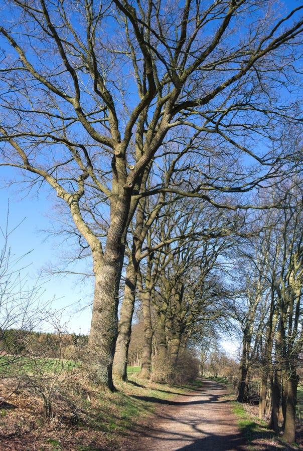 Wittmoor - knotige Bäume an der Gasse - ich - stockfoto