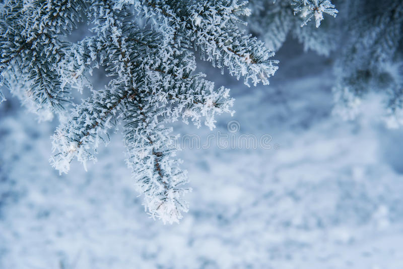 Wizerunek śnieżny jedlinowego drzewa tło, abstrakcjonistyczny naturalny tło obraz stock