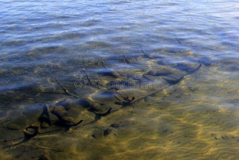 Wizerunek Bateau ` wraku ` replika, umieszczający w płytkim nawadnia Jeziorny George, Nowy Jork, 2016 fotografia royalty free