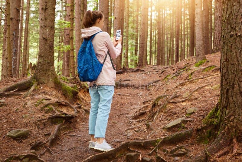 Wizerunek doświadczona podróży blogger pozycja w środku las wokoło ogromnych drzew, mienie jej smartphone w oba rękach, bierze fotografia stock