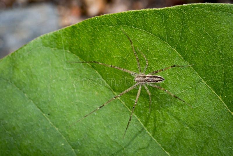 Wizerunek Dostrzegający pepiniery sieci pająk obrazy royalty free