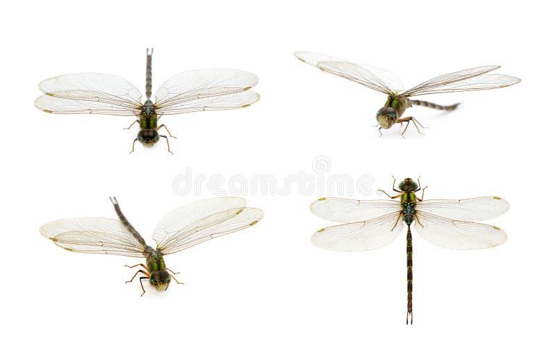 Wizerunek dragonfly grupa na bia?ym tle Przejrzysty skrzyd?o insekt insekt zwierz? zdjęcie royalty free