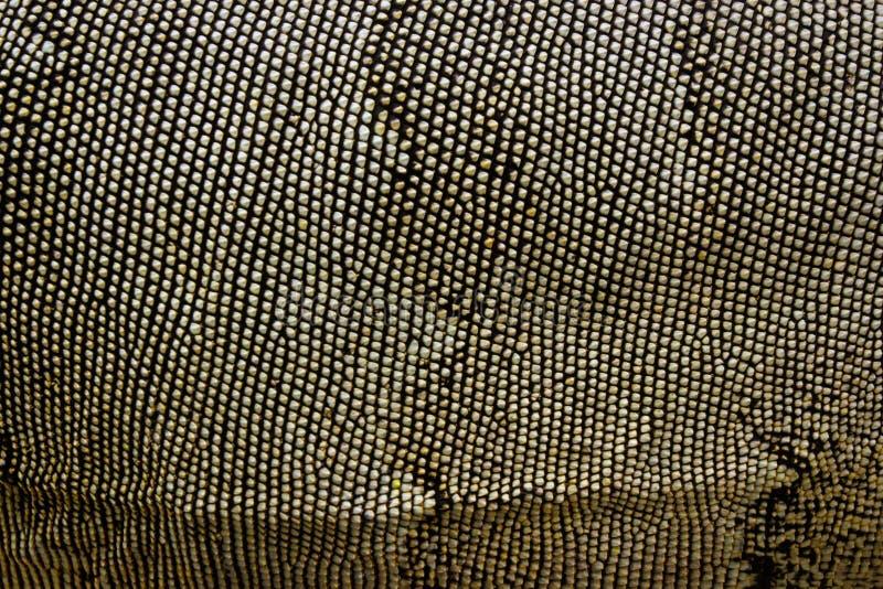 Wizerunek iguany skóra zwierząt tła jaskrawy barwiony ilustracyjny setu wektor dzikich zwierząt fotografia stock