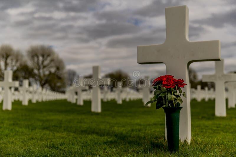 Wizerunek jeden krzyż z wazą z czerwonymi różami w Amerykańskim Cmentarnianym Margraten fotografia royalty free