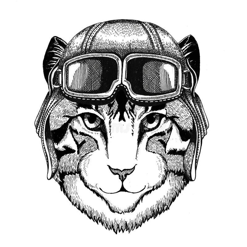 Wizerunek jest ubranym rzemiennego hełma lotnika domowy kot, rowerzysta, motocykl ręka rysująca ilustracja dla tatuażu, emblemat ilustracji