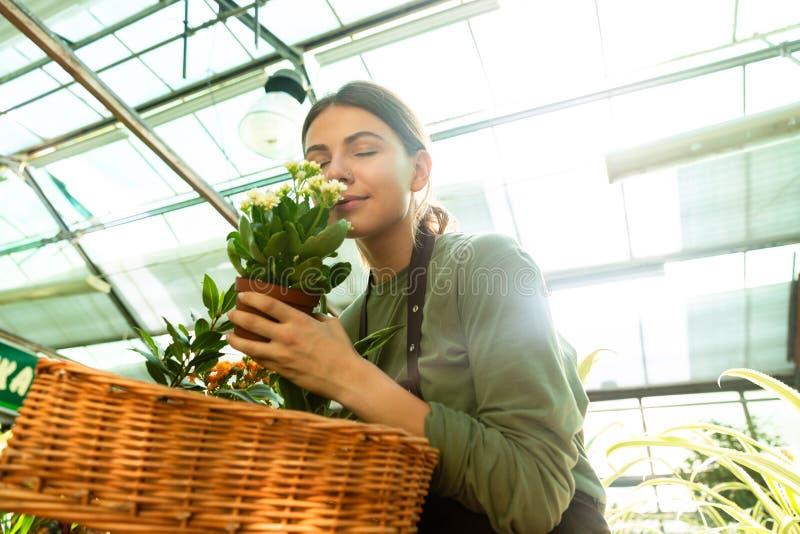 Wizerunek młoda kwiaciarni kobieta 20s jest ubranym fartucha wącha rośliny od kosza zdjęcie stock