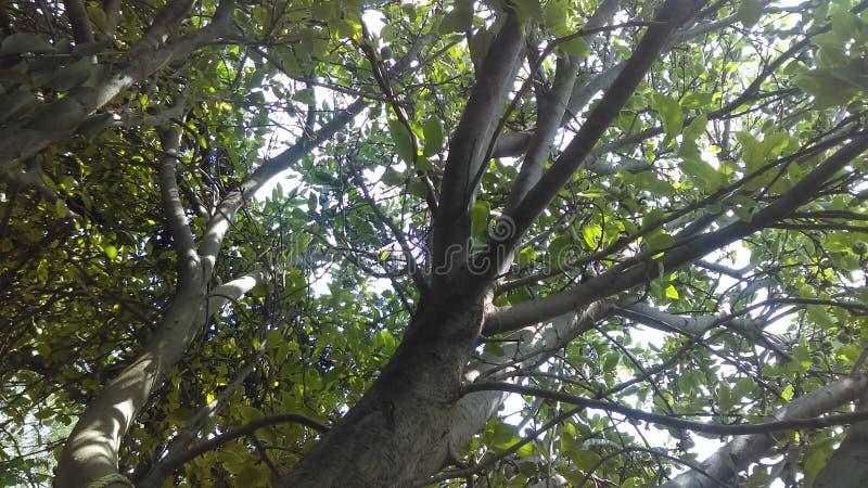 wizerunek natury drzewo zdjęcia royalty free