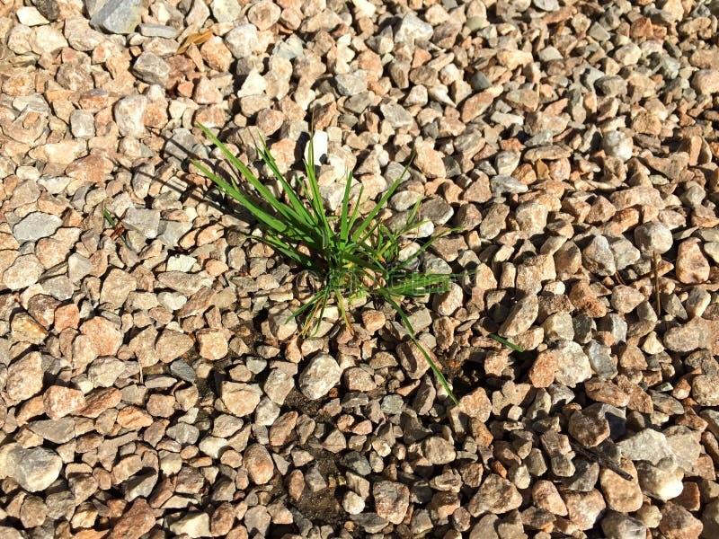 Wizerunek odrośnięta trawa przez żwiru, granit zdjęcia royalty free
