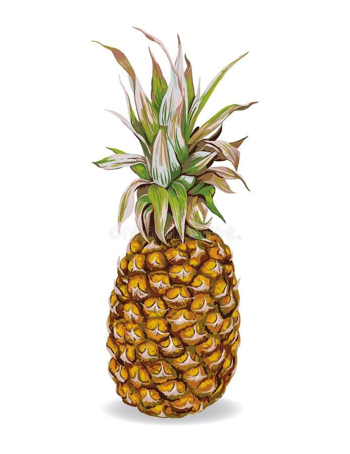 Wizerunek owocowy ananas royalty ilustracja
