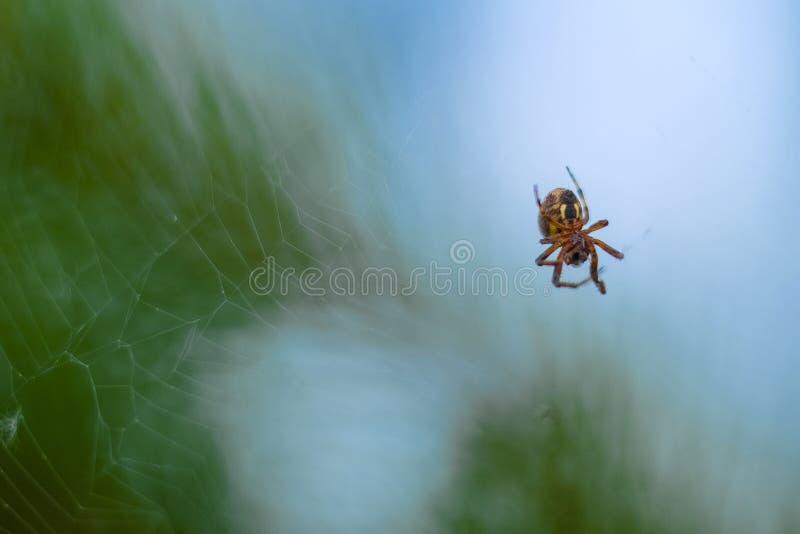 wizerunek pająk obrazy stock