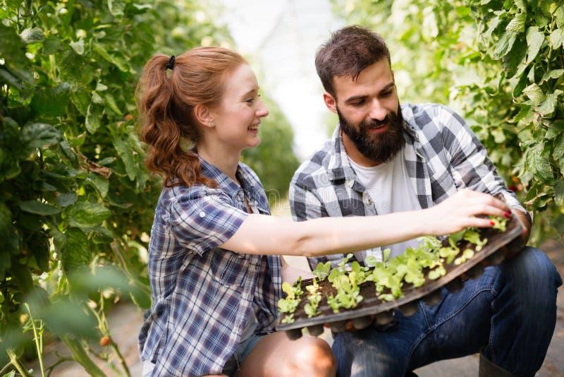 Wizerunek para rolnik rozsada kiełkuje w ogródzie obraz royalty free