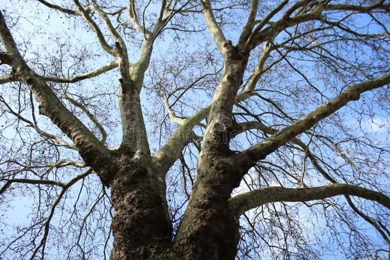 Wizerunek pod drzewem z nieba tłem fotografia stock