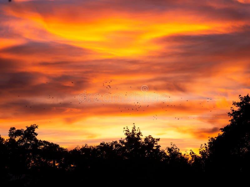 Wizerunek ptaki lata podczas kolorowego zmierzchu nad drzewami fotografia royalty free