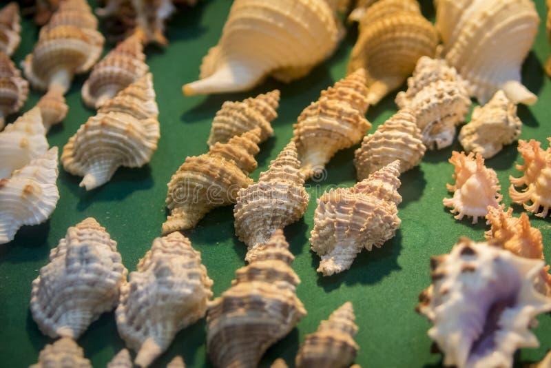 Wizerunek Seashell kolekcja obraz stock