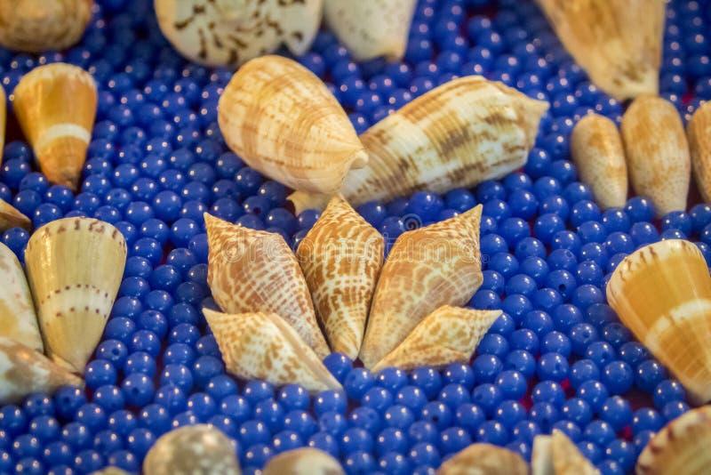 Wizerunek Seashell kolekcja zdjęcia stock