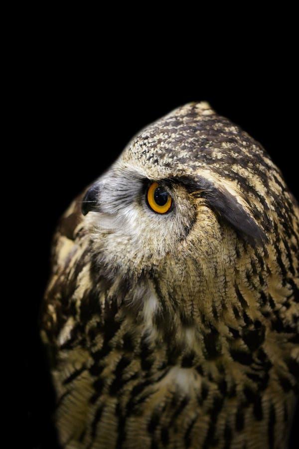 Wizerunek sowa na czarnym tle ptaki dzikich zwierz?t obraz stock